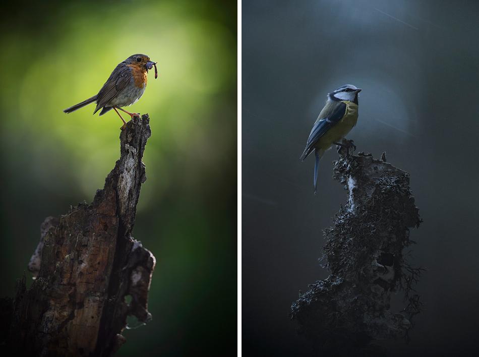vaikse_linnud